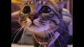 Только смешные кошки Подборка приколов с котами кошками и котятами