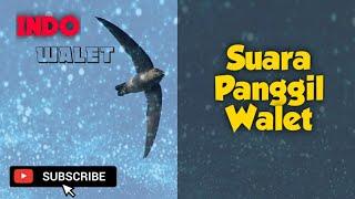 SUARA PANGGIL WALET || SP JUBAH PUTIH
