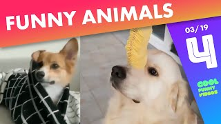 Funny Animals Compilation of the week 🐶😻 - March 2019, #4 | Cool Funny Videos