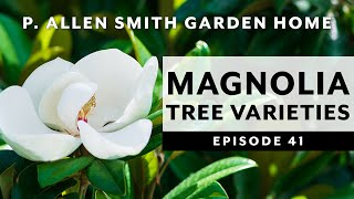 Types of Magnolia Trees & How to Care for Them   P. Allen Smith (2020)