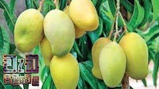 Wedapiliwela - (2018-10-09) | ITN Thumbnail