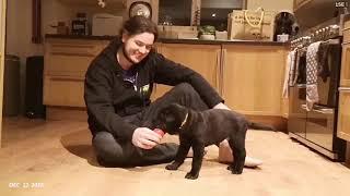 Hamish is 6 months old! | Shar Pei Puppy