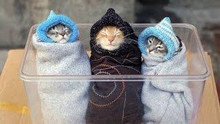 Cat's best #1   Подборка приколов с котами