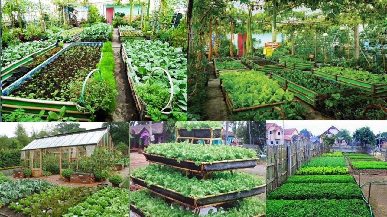 ไอเดียเเปลงปลูกผักสวนครัว สวยๆ ประหยัดพื้นที่ ตามวิธีเกษตรพอเพียง