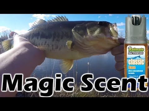 Fishing In Lincoln California With Baitmate (Great Spray!)