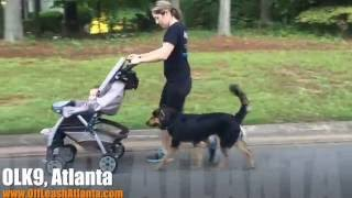 Off Leash Heeling With Dog Distraction! | Shepherd Mix | Dog Training Atlanta