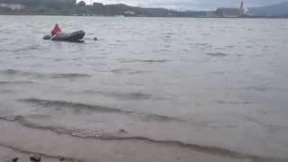ССВ прямошерстный ретривер  буксировка лодки