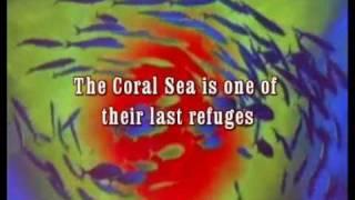 Coral Sea Dreaming -Awaken