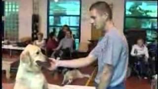 Собаки для инвалидов.flv