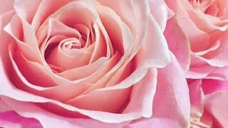 YouTube Captureから ヘブンリーな夜と✨ ローズの愛の香りを…、 プレシ...