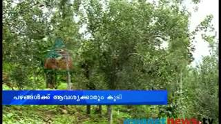 The delicious fruits at Kanthalloor farms: Idukki News: Chuttuvattom  24th July 2013 ചുറ്റുവട്ടം