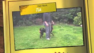 Tia The Rottweiler Training And Obedience At 7 Months