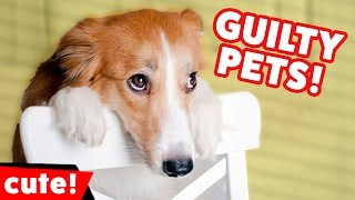 Funniest Guilty Pet & Animal Videos December 2016 Weekly Compilation | Kyoot Animals