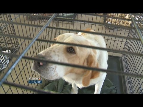 Cold and pets: What Texas law allows