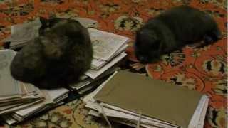 кошки и картины часть 3