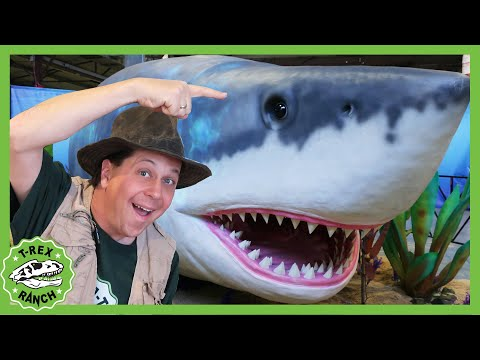 Giant Shark And Dinosaurs T-Rex Dinosaur Missing In Jurassic Quest Kids Adventure & More T-Rex Ranch