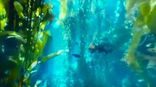 360 diving exploration of kelp forest aquarium big blue live bbc earth unplugged