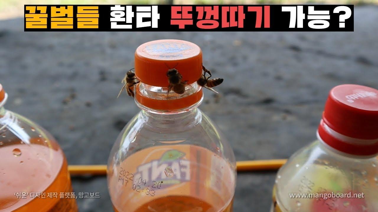 꿀벌에게 환타 뚜껑따게 만들기 도전. 과연 결과는?Make the honeybee open the Fanta