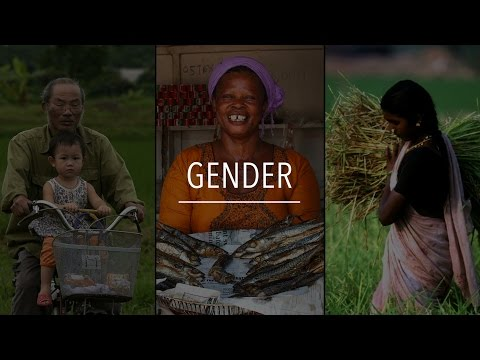 FAO Policy Series: Gender