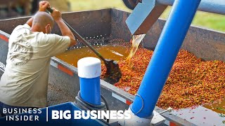 How Millions Of Pounds Of Coffee Are Processed At Hawaiian Coffee Farms | Big Business