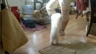 World's Smartest Dog Pheobie thumbnail