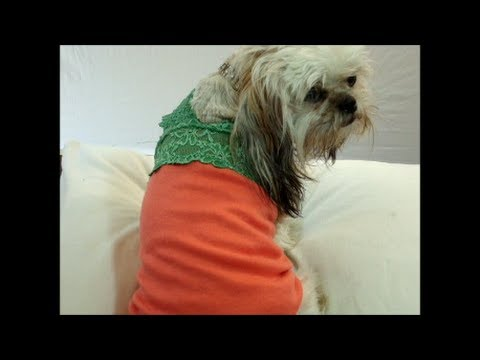 Dog Summer Clothes Pattern Free Thunder Shirt For Dogs