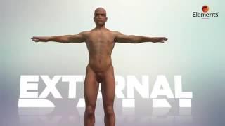 Elements Wellness - No Vedana (English)