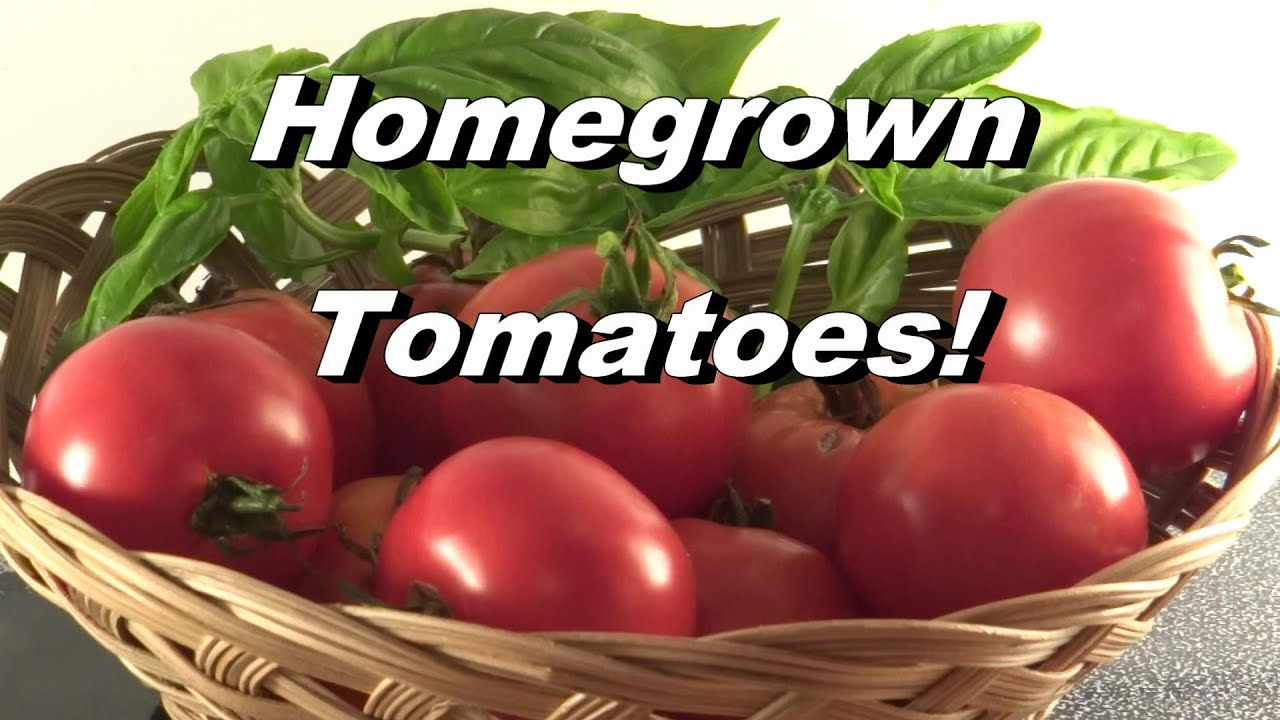 homegrown tomatoes just for fun enjoy  john denver / guy, Natural flower