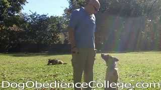 Greta Dog Obedience Training Video Memphis