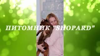 """Питомник """"Shopard"""". Жизнь котов и кошек"""