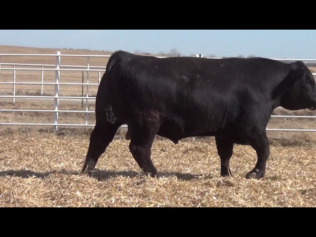 Express Ranches Lot 381