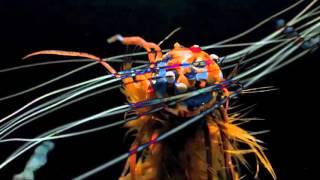 Björk - Undo (Vulnicura Live)