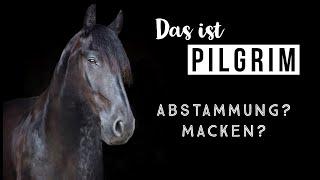 WER IST PILGRIM ? | Fun Facts und Top Secrets |  Pilsali