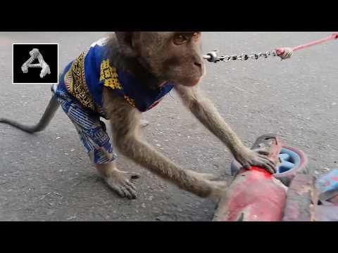 Topeng Monyet ( Masked Monkey )
