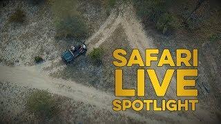 safariLIVES thumbnail