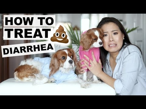 HOW TO TREAT DIARRHEA AT HOME | Dog Tips 101 | Tricks to stop diarrhea in dogs