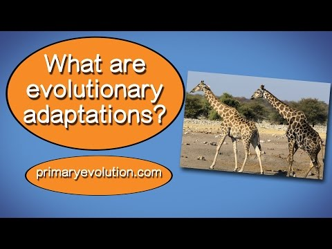 What are evolutionary adaptations?