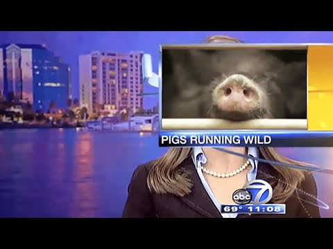 Funniest Animals News Bloopers 📹 [Funny Pets]
