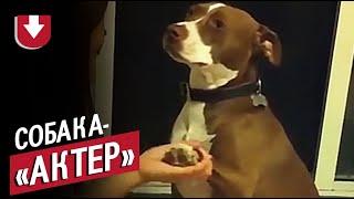 Собака очень не хочет стричь когти