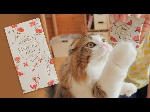 去勢手術後のご褒美!高級おやつに夢中な猫【モンプチラバーズキッス | モンプチ ブティック】