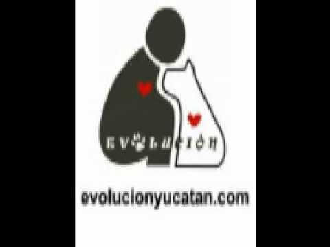 Evolucion interview