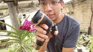 ¿Cómo regar orquídeas Vanda o cualquier orquídea epífita? || Orquiplanet