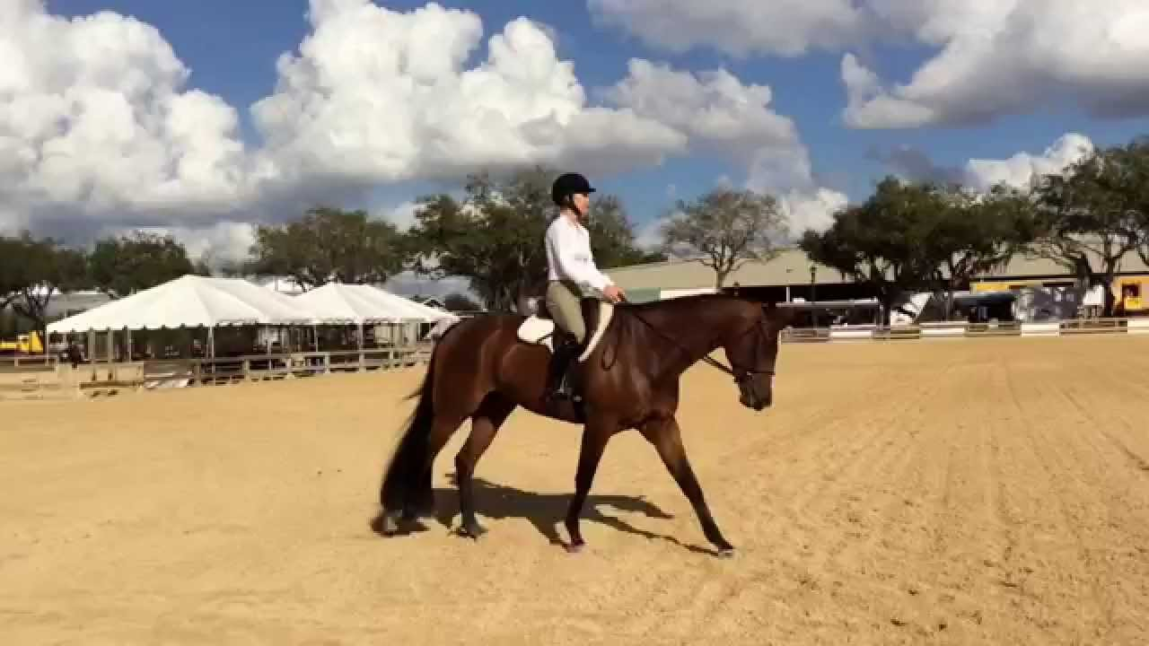 Ride The Pattern Hunt Seat Equitation Part 3 Youtube