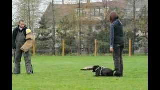 Jumper Staffik Trening