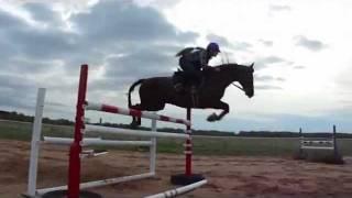Morgan horse jumps Grand Prix height fences