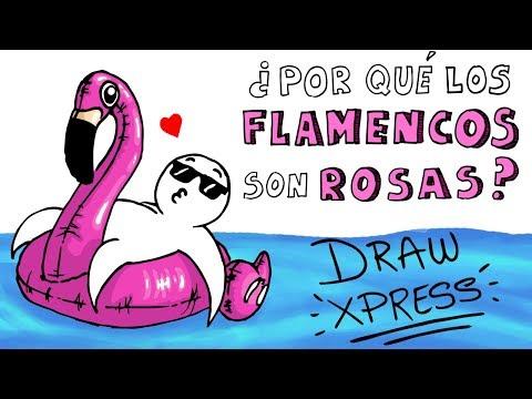 Download Youtube: ¿POR QUÉ LOS FLAMENCOS SON ROSAS?   DrawXpress