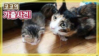 고양이 육아 스트레스? 옆집 새댁 코코가 가출했어요!? BJ야메쌤