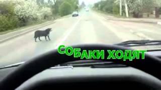 Кони и собаки гуляют по ГРОДНО (БЕЛАРУСЬ)