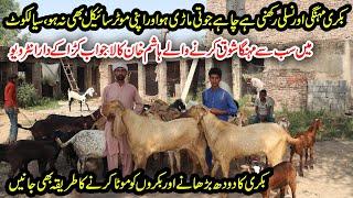 Hashim Khan Goat Farm | Sialkoti Goat Farming From 8 Years | Goat Milk Increasing Tips