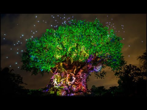 Animal Kingdom Live Stream - 1 walt disney